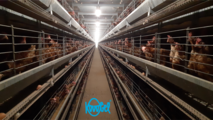 Enriched cage system for laying hens